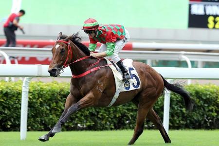 Regency Legend now eyes HK Sprint