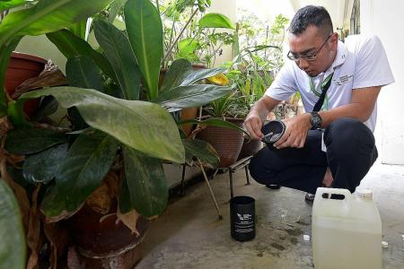 More mosquito traps to be deployed as dengue cases rise