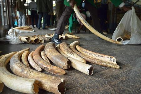 Illegal wildlife trade affects climate change: Experts