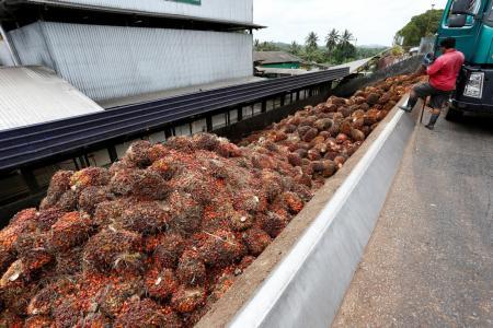 Malaysia warns new EU rules may hurt palm oil trade