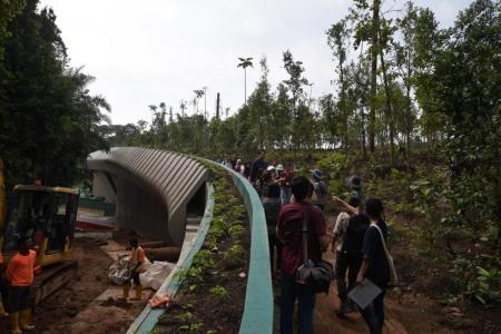 Mandai Wildlife Bridge