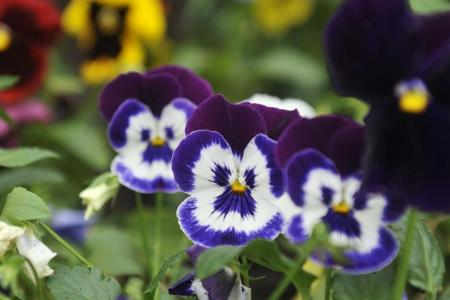 Edible flowers and their health benefits