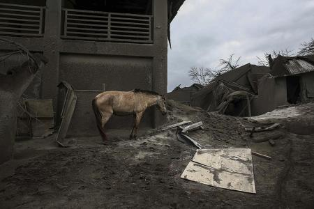Owners return to volcano island to save their animals from Taal