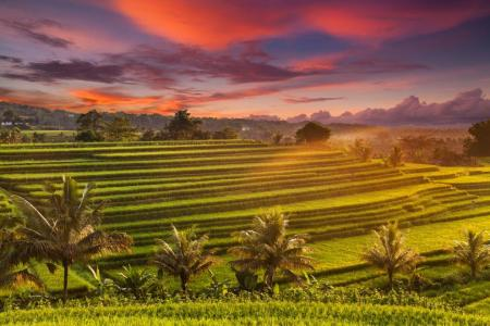 Great escapes to the intriguing Indonesia