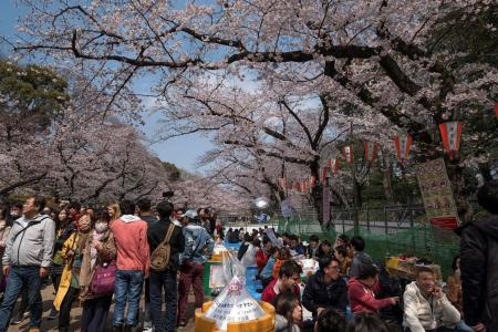Tokyo discouraging cherry blossom parties over virus fears