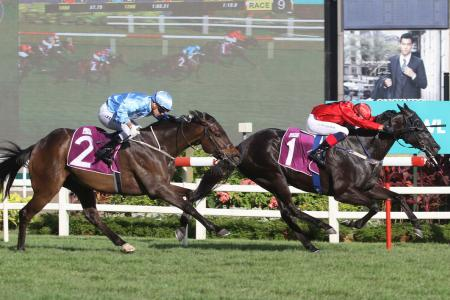 Hard to topple classy Top Knight