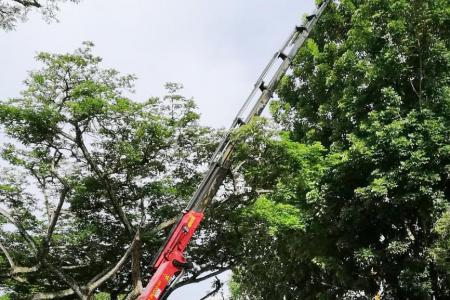 Macaw rescued after 24 hours, with help from crane operator