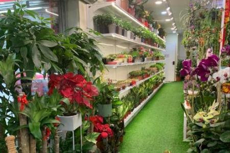 Sales of indoor plants shoot up ahead of stay-home orders