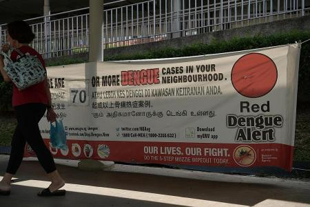 Dengue cases surging, a worrying issue during circuit breaker