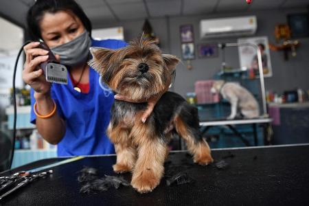 Pet services like basic grooming, physiotherapy to resume from June 2