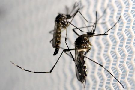 NEA urges community support in dengue prevention as cases rise