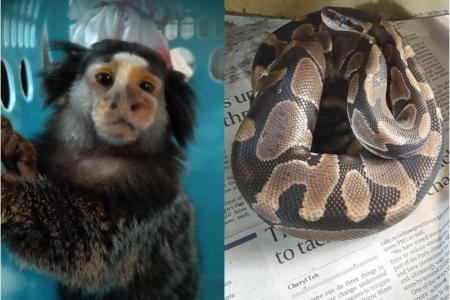 Marmoset euthanised, ball python found in plastic bag