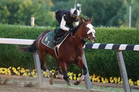Tiz the Law hot for Belmont