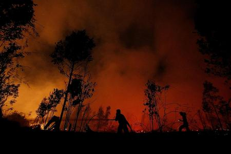 Central Kalimantan declares state of emergency over forest fires
