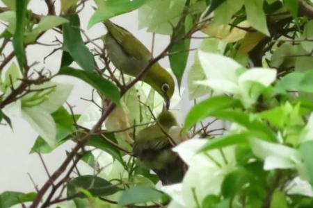 Residents became wildlife observers during circuit breaker