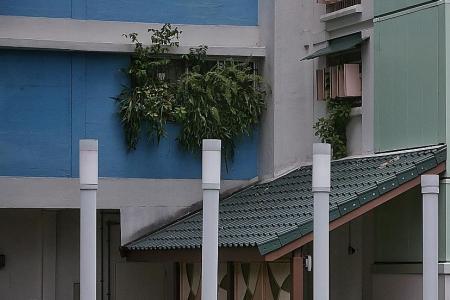 Tampines 'jungle flat' under scrutiny during dengue season