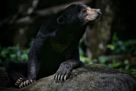 Wildlife Reserves Singapore launches animal adoption programme