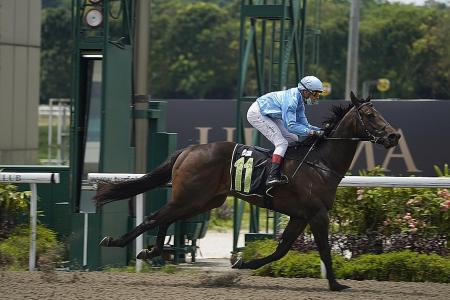 Clements' new horses shine