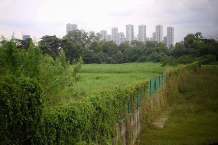 Singapore's second nature park network will be on northern coast