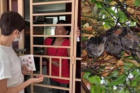 Bats flying into Upper Boon Keng Road flats do not carry virus strains