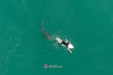 Dramatic drone footage shows shark tracking surfer in Australia