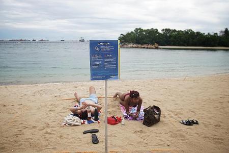 No swimming at Sentosa's Siloso Beach after sightings of box jellyfish