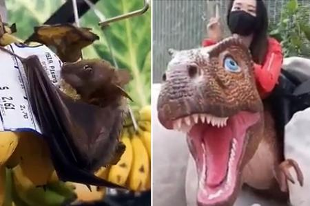 Going bananas over batty behaviour on baby dinosaurs