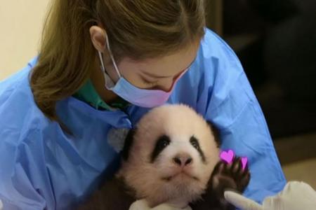 K-pop's Blackpink pulls video after backlash in China over baby panda