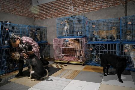 China animal rescuer shares home with more than 1,300 dogs, 100 cats