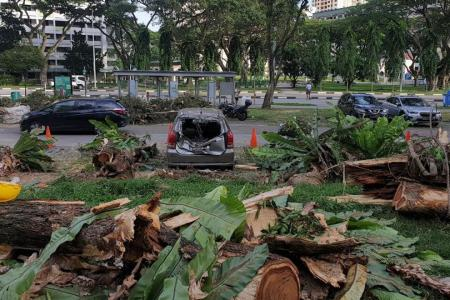 Fallen tree damages cars, motorcycles in Toa Payoh