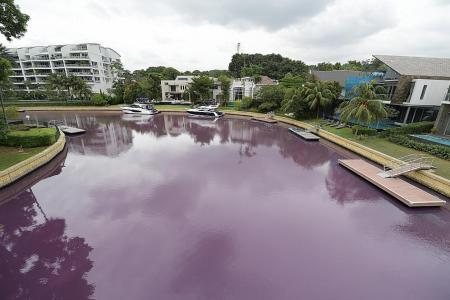 Heavy rain likely led to algae bloom that turned water pink at Sentosa