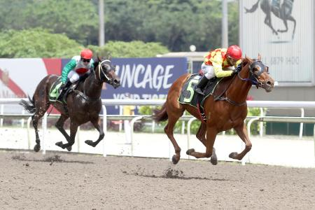 This one's  for you, says trainer Brown of late owner Yong