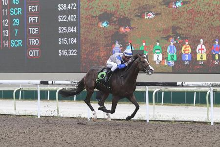 Knight Love for encore in the last race