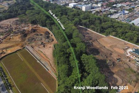Cleared Kranji woodlands a vital connector for animals