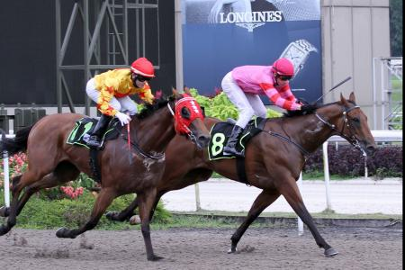Yesterday's gallops by horses engaged in Ipoh this weekend