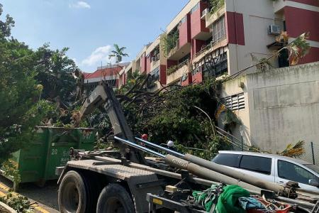 Woman, 84, gets home just after tree falls on condo unit