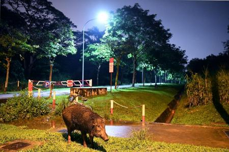 People feeding wildlife doing more harm than good: Experts
