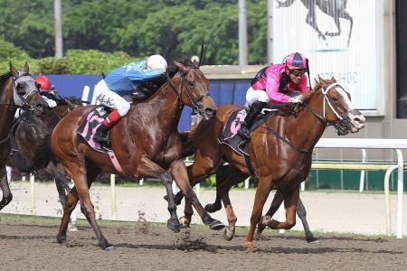 Senor Don overcomes wide barrier  to score