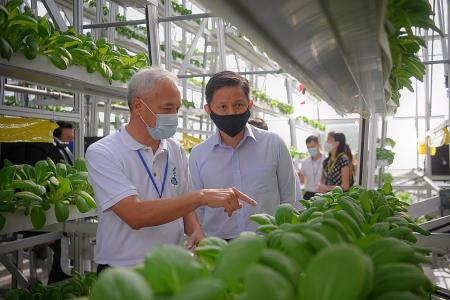 High-tech 'toolbox' to raise food production when need arises: Chan
