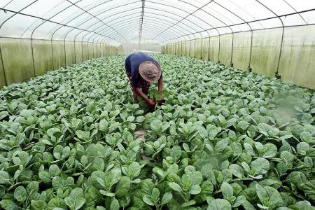 Guidelines to help local farms ensure clean and green produce