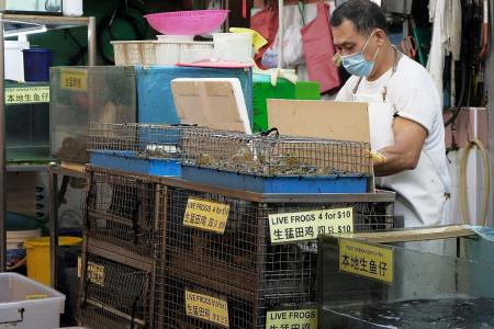 Sale and slaughter of live turtles and frogs at wet markets banned