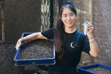 Her dream to help environment takes off with insect farm