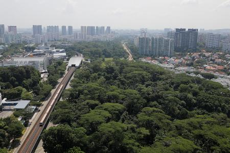 Dover Forest will be used for both housing and nature