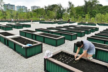 360 new gardening plots to open, online application starts on Friday