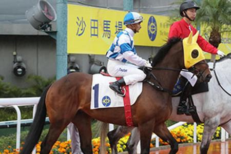 Track and trip will suit Harmony Spirit