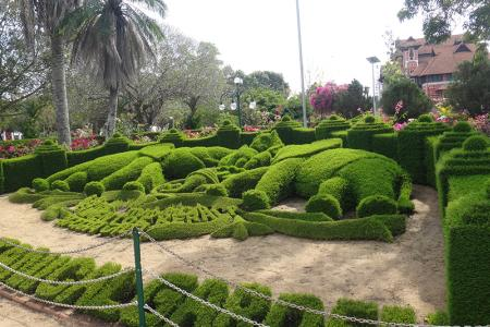 The Thiruvananthapuram Zoo is the oldest zoo in India