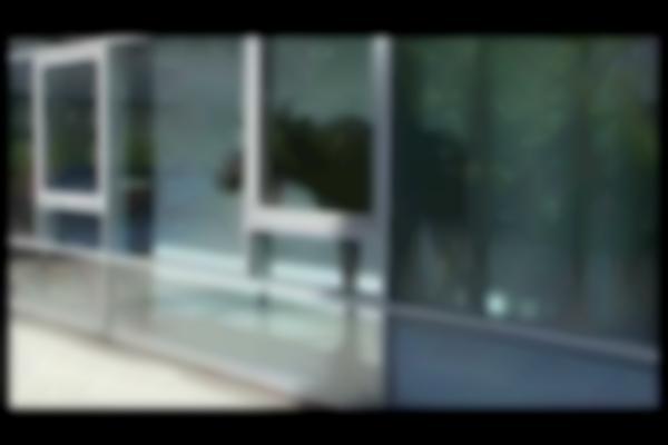 Elk Wanders Into German Office Building