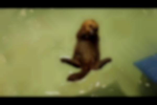 Meet World's Cutest Sea Otter Pup