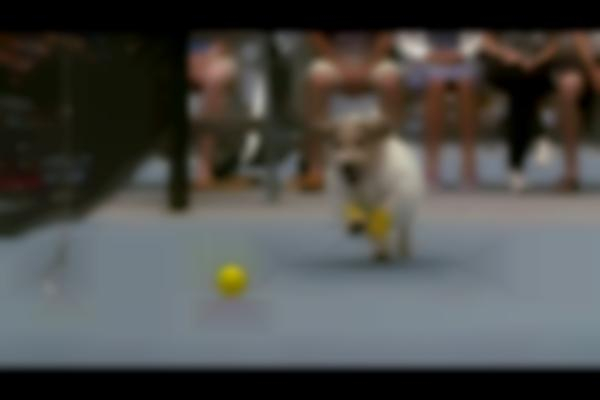 Venus Williams and The Best Ball Boys in the World | ASB