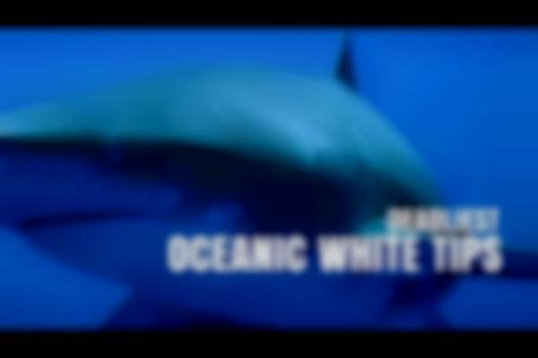 Deadliest Oceanic White Tip Sharks | SHARK WEEK 2016